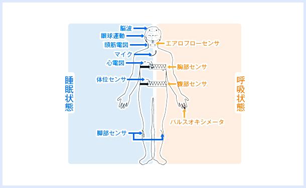 睡眠脳波検査(PSG)、睡眠潜時反復検査(MSLT)